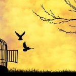 [object object] aaaa Cage birds 1 150x150